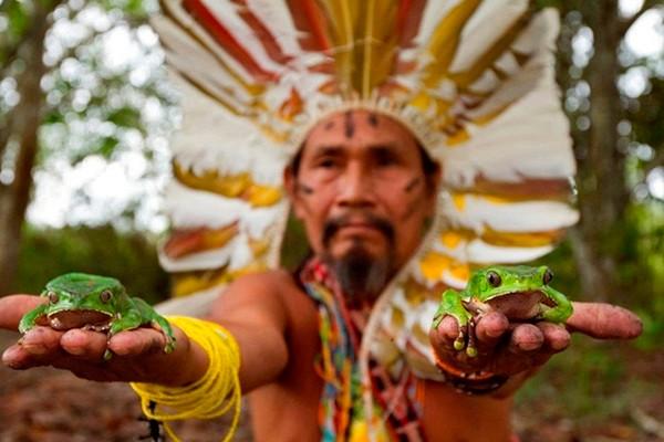 Tribu del Amazonas publica enciclopedia con sus conocimientos en medicina natural
